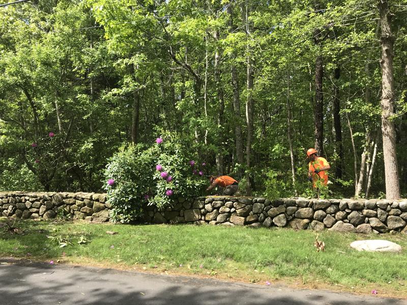 Tree Service Professional Tree Amp Landscape Construction